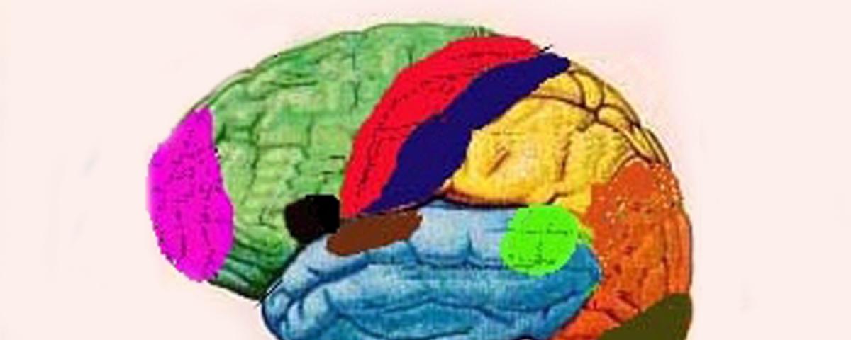 Funções Especializadas do Córtex Cerebral